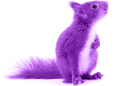 Squirrle